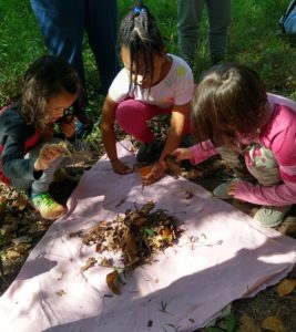 Children sifting leaf litter
