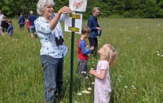 milkweed flagging